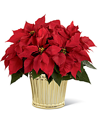 The FTD Poinsettia Planter by Better Homes and Gardens