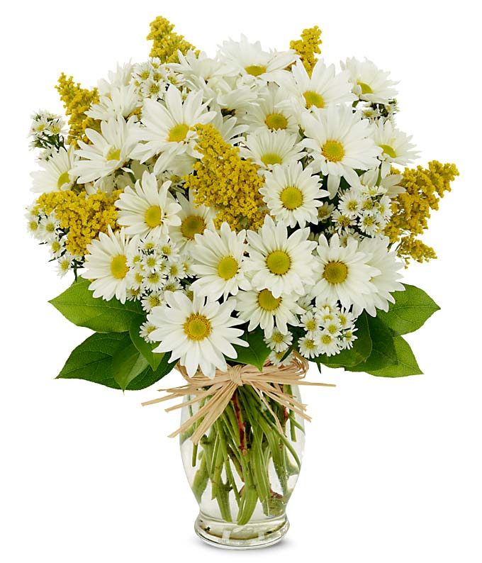 Flower Delivery Today on Daisy Delight   Usaflorist Com